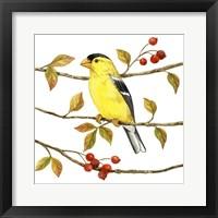 Framed Birds & Berries II