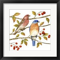 Framed Birds & Berries IV