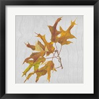 Autumn Leaves III Framed Print
