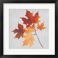 Autumn Leaves IV Framed Print