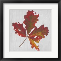 Autumn Leaves V Framed Print