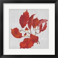 Autumn Leaves VI Framed Print