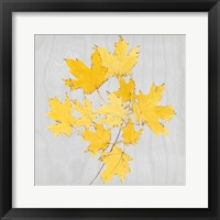Framed Autumn Leaves VII
