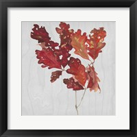 Autumn Leaves VIII Framed Print