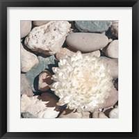 Framed Stone Crop II