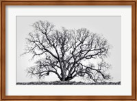 Framed Grand Oak Tree I