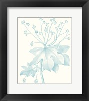Framed Botanical Study in Spa I