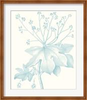 Framed Botanical Study in Spa I