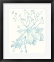 Botanical Study in Spa I Framed Print