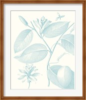 Framed Botanical Study in Spa III