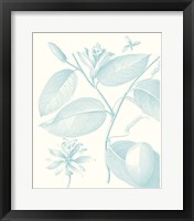 Framed Botanical Study in Spa III