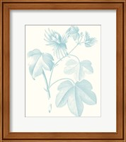 Framed Botanical Study in Spa IV