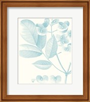 Framed Botanical Study in Spa V