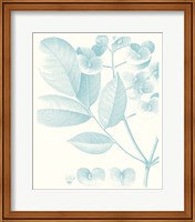 Framed Botanical Study in Spa V