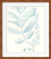 Framed Botanical Study in Spa VI