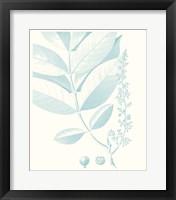 Botanical Study in Spa VI Framed Print