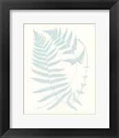 Framed Serene Ferns III