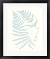 Serene Ferns III Framed Print