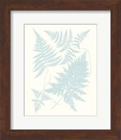 Framed Serene Ferns IV