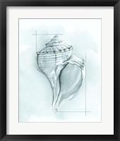 Framed Coastal Shell Schematic I