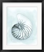 Framed Coastal Shell Schematic II