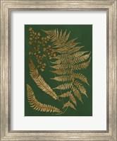 Framed Gilded Ferns I