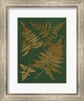 Framed Gilded Ferns II