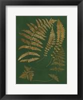 Framed Gilded Ferns III