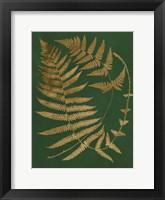 Framed Gilded Ferns IV