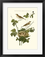 Framed Nozeman White Throat Blackberry