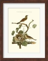 Framed Nozeman Common Teal Nest
