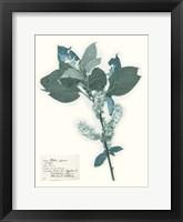Framed Pressed Flowers in Spa I