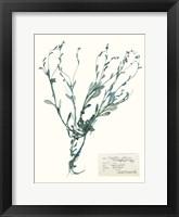 Framed Pressed Flowers in Spa II