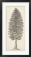 Framed Pacific Northwest Tree Sketch II