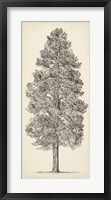 Framed Pacific Northwest Tree Sketch III