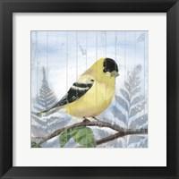 Framed Eastern Songbird III