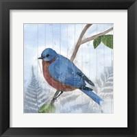 Framed Eastern Songbird IV