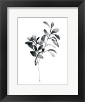 Framed Brume Botanical I