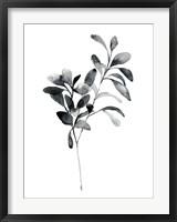 Framed Brume Botanical I