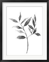 Framed Brume Botanical II