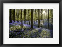 Framed Fairytale Forest Sunlight 2