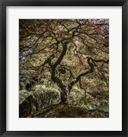 Framed Maple Tree 2