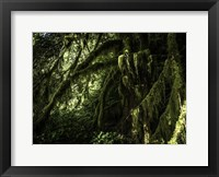 Framed Mossy Tempered Forest
