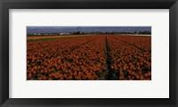 Framed Tulip Field 2 Crop 2