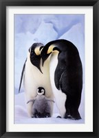 Framed Penguin Family Portrait