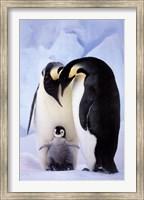 Framed Penguin Family Portrait