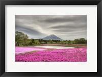Framed Mount Fuji Pink Moss