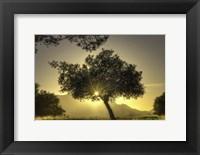 Framed Sunburst Through a Tree Los Angeles