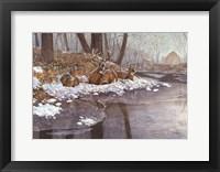 Framed Creekside