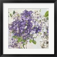 Framed Summer Hydrangea II